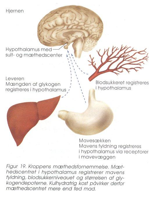 kulhydratstofskifte