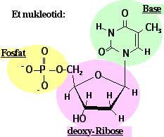 Hvad er et molekyle